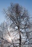 Winterbaumaste vertikal Lizenzfreie Stockfotos