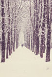 Winterbaumgasse Lizenzfreies Stockfoto