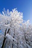 Winterbaumhintergrund Lizenzfreies Stockfoto