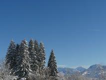 Winterbaumhintergrund Lizenzfreie Stockbilder