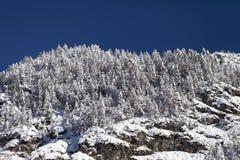 Winterberglandschaft mit schneebedeckten Bäumen Stockfotos