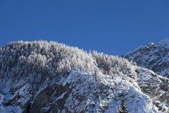 Winterberglandschaft mit schneebedeckten Bäumen Lizenzfreie Stockfotos