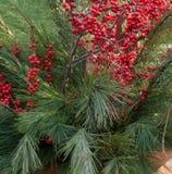 Winterberries and Pine Stock Photo