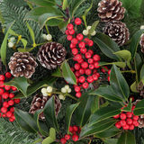Winterberry Holly Stock Images
