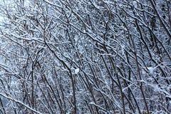 Winterbeschaffenheit von threes Stockbilder