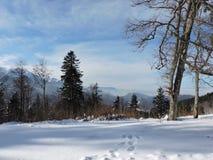 Winterbild Stockfoto