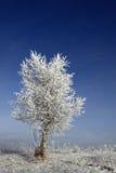 Winterbirke Stockbilder