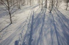 Winterbirkenwald, Spuren von Skis im tiefen Schnee stockfoto