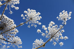 Winterblume lizenzfreie stockbilder