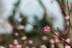 Winterblume Stockfotografie