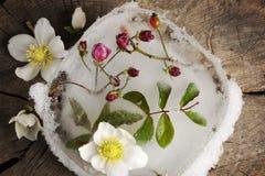 Winterblumen Lizenzfreie Stockbilder