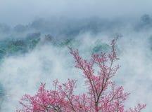 Winterblumen Stockfotos