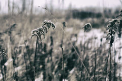 Winterblumen Stockbilder