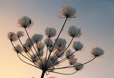 Winterblumen an der Dämmerung Abschluss oben lizenzfreie stockfotografie