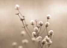 Winterblumen tonten Stockbild