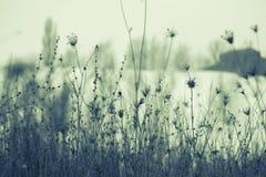 Winterblumenstrauß Lizenzfreies Stockbild
