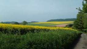 Winterborne农场 免版税库存图片