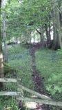 Winterborne森林 库存照片