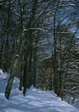 Winterbuche-Waldweg stockbild