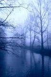 Winterbäume im Nebel Stockfotos