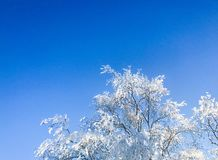 Winterday in sweden. 2018. Winterday and sun in forest Royalty Free Stock Images