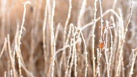 Winterdetail stock video