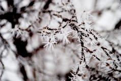 Winterdornen Stockbild