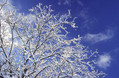 Winterdream Stock Image