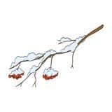 Winterebereschenniederlassung Lizenzfreies Stockfoto