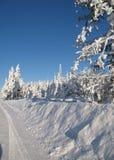 wintered的边缘结构树 免版税库存图片