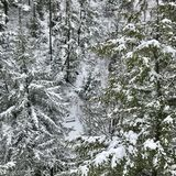 Wintereinsamkeit Lizenzfreies Stockbild