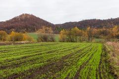 Winterernte gekeucht auf dem Gebiet Lizenzfreies Stockfoto