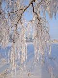 Winteretüde Stockfotografie