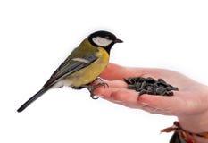 Winterfütterung der Vögel Lizenzfreies Stockbild
