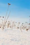 Winterfeld Stockbilder