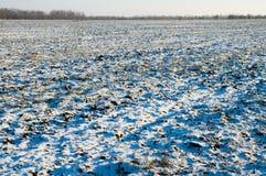 Winterfeld lizenzfreie stockfotografie