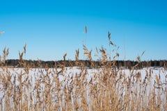 Winterfeld mit dem Wald hinten Sonniger Tag Klarer blauer Himmel Stockbild