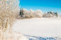Winterfeld und blauer Himmel Lizenzfreies Stockbild