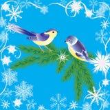 Winterfeld und -vögel. Lizenzfreies Stockbild