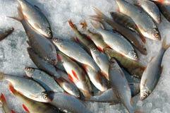 Winterfischen Stockfoto