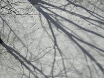 Winterflorahintergrund stockfotografie