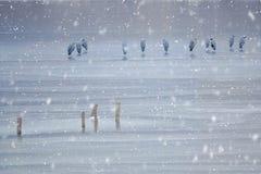 Winterflusslandschaft stockbilder