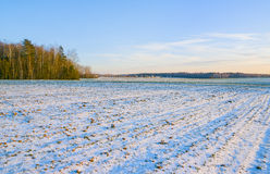 Winterfrüchte bedeckt mit Schnee Lizenzfreie Stockfotografie