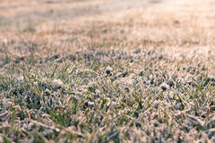 Winterfrost Stockfotografie