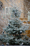 Winterfrost Lizenzfreie Stockfotos
