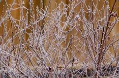 Winterfrost Stockbild