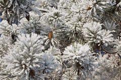 Winterfrost auf geziertem Baum Stockbilder