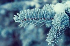 Winterfrost auf gezierter Baumnahaufnahme Lizenzfreie Stockfotografie