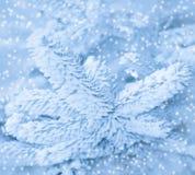 Winterfrost auf gezierter Baumnahaufnahme, Monochrom, getont. Stockbild