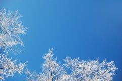 Winterfrosthintergrund Stockfoto
